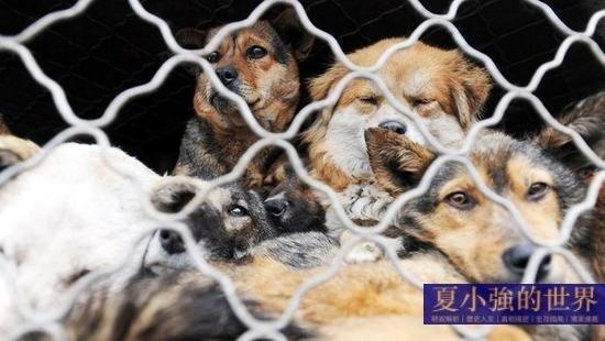 夏小強:為甚麼救狗不救人?