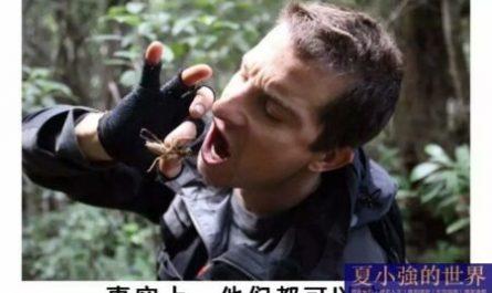 為什麼會有蟑螂這種反人類的動物出現?