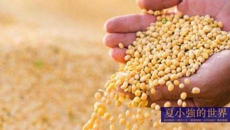糧食儲存種類選擇及方法指導丨硬核生存指南