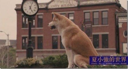 夏小強:可憐的狗,誰叫你不幸生在中國?