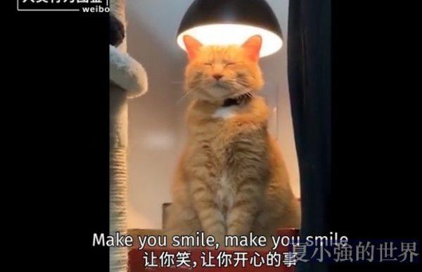 貓咪迷惑行為圖鑒(視頻)
