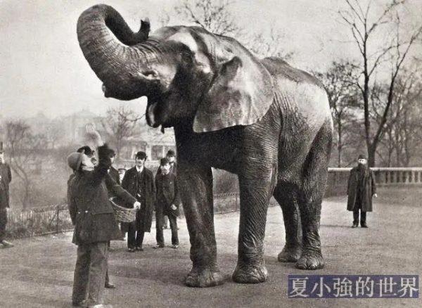 104年前,美國一頭大象向人類宣戰,被判絞刑,人性經不起考驗