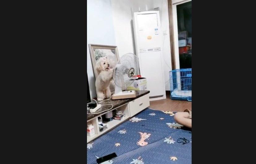 見過最會安排自己狗生的狗(視頻)