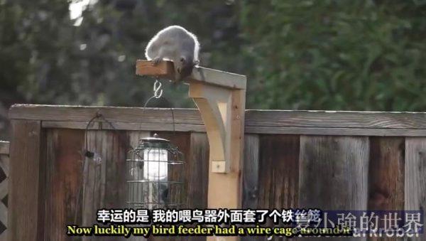 吃貨松鼠的闖關遊戲(視頻)