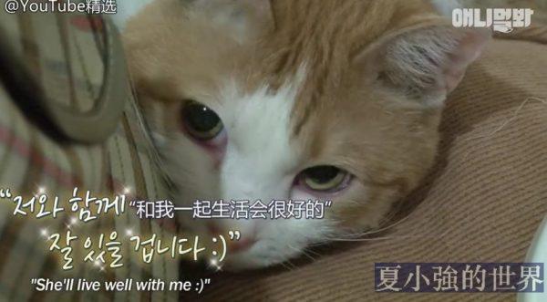 暖心大叔營救屋頂裡的「幽靈」貓咪(視頻)