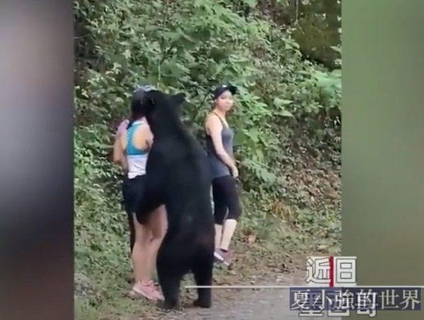 與熊共舞!墨西哥3名女子戶外遭遇黑熊冷靜脫險 (視頻)
