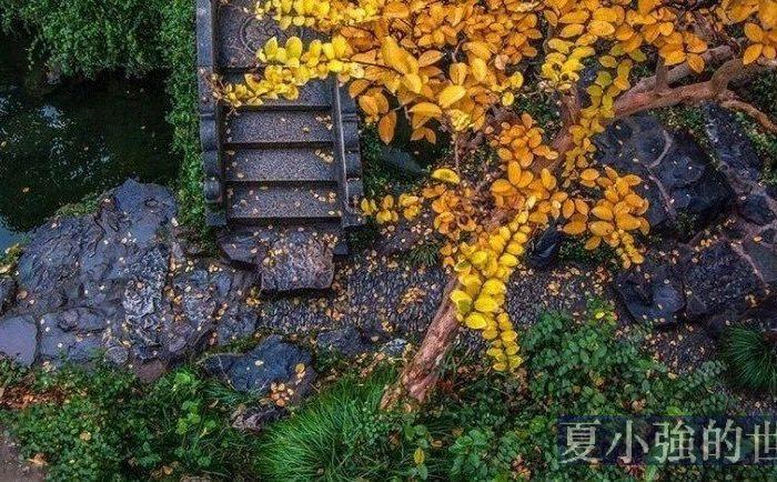 一入秋,蘇州就美成了姑蘇
