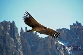 【明子專欄】鹰之神的启示