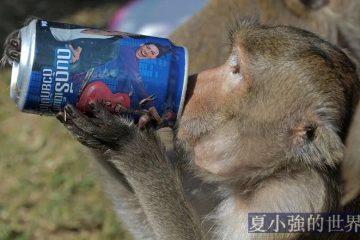 泰國猴子,吃不了兜著走