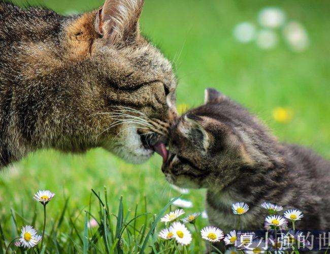 不要聽動物保護主義者妖言惑眾,大家只管給流浪貓餵食