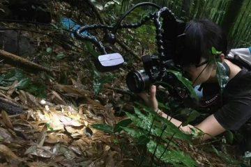 超震撼!90後中國姑娘拍下神祕莫測的菌物世界,5萬張照片,每一張都異常精采