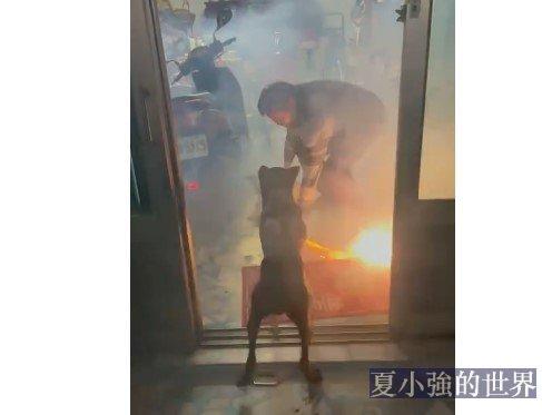 小狗狗只是喜歡煙花啊(視頻)
