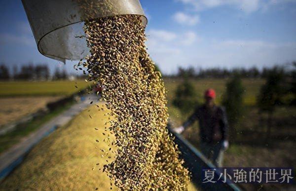 可疑的2020中國糧食進口激增