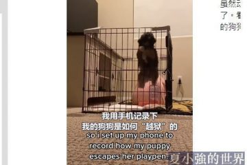 國外網友記錄下自家狗子「越獄」的全過程(視頻)