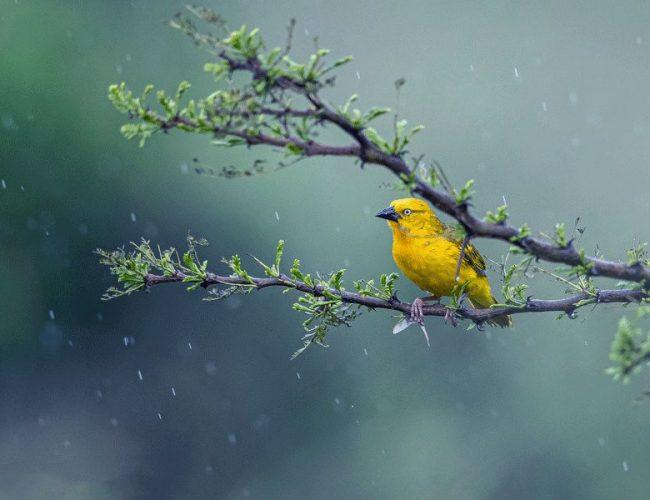 聽春,喜雨,中國人的浪漫