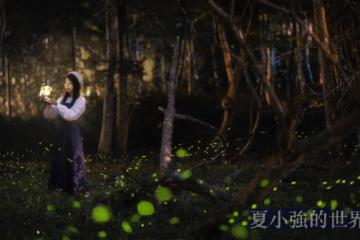 美到捨不得眨眼!精選臺灣「4大最佳賞螢火蟲景點」:漫步森林享受熒光美景