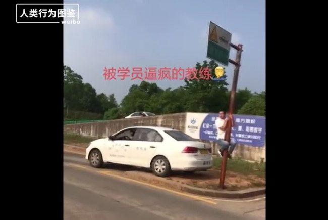 駕校差生圖鑒(視頻)