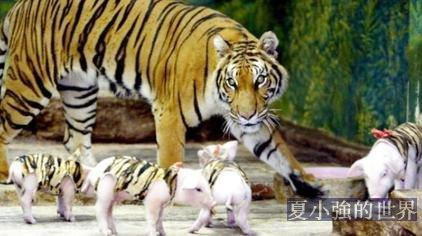 釣魚視頻大火的本質是扮豬吃老虎的劇情
