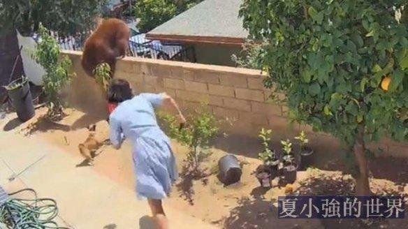 勇猛!17歲的女孩雙拳與熊搏鬥,救下寵物狗