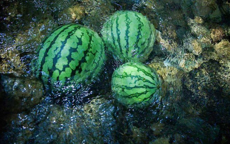中國人吃瓜有多厲害?