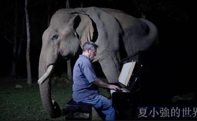月光灑下,一人,一象,一鋼琴