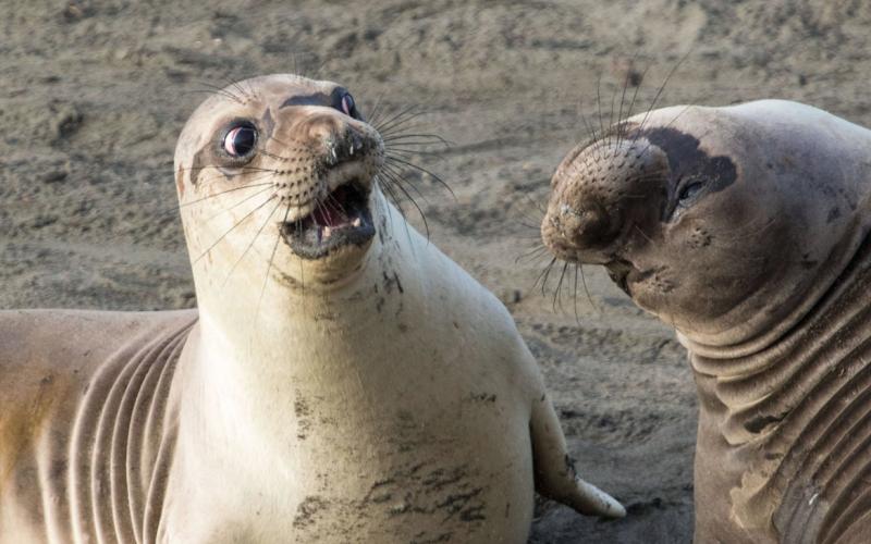 搞笑野生動物攝影獎,公布了今年的決賽作品