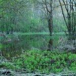 紅冠飛蛇迷惑人 俄羅斯沼澤死人均赤裸一絲不掛