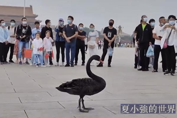 王友群:黑天鵝突降天安門 中南海有大震盪?