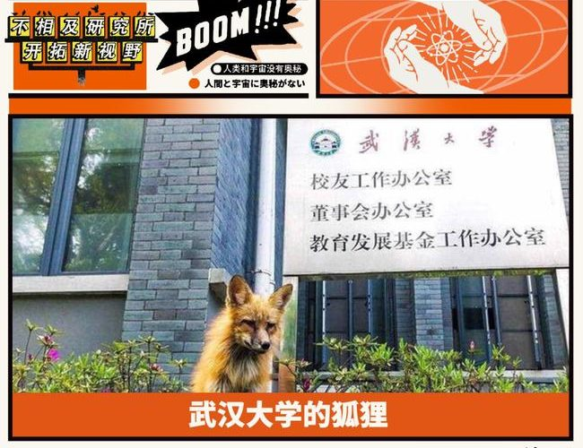 有多少人在武漢大學迷路,就有多少人見過靈狐